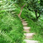 path-350