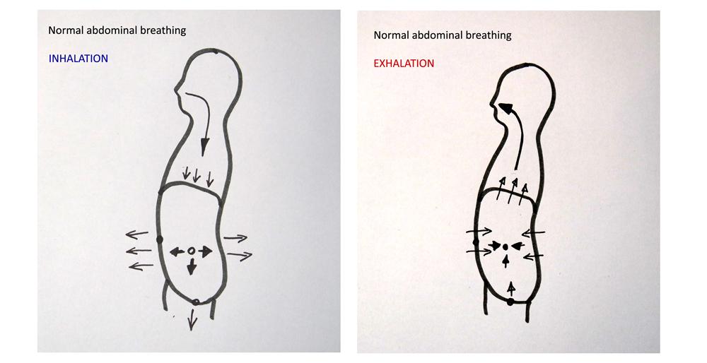 normal abdominal