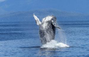 whale-1000-web