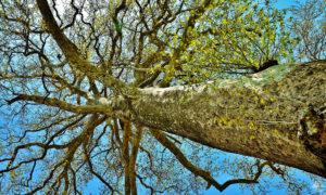 tree-web